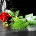 محبت مازندرانی