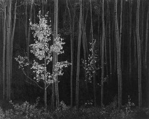 آثار آنسل آدامز