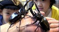مطالعه جالب وهیجان انگیز از پیدایش حشرات