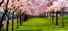 پیامک فصل بهار جدید