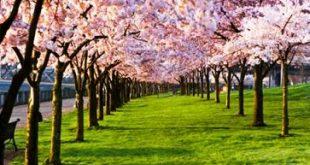 dnzqx2504uw77k5xbdak 310x165 - پیامک فصل بهار جدید