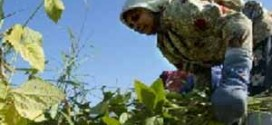 نقش اشتغال زنان در توسعه روستا