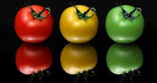he3657 310x165 - درمان واریس با گوجه فرنگی