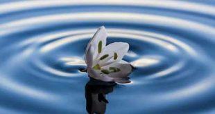 ra4 4266 310x165 - دلایلی برای مهربانی